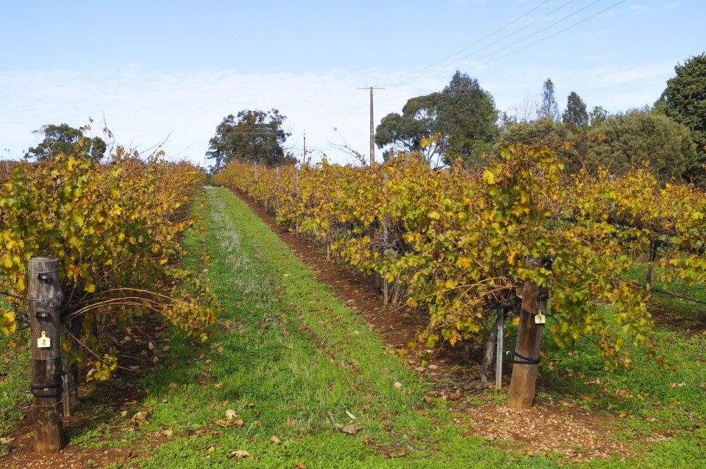 Barossa Valley Vines