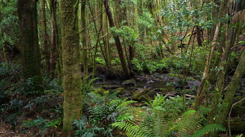 Tasmania forest track to waterfall