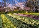 Keukenhof Flower Gardens 2016