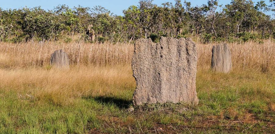 Gigantic Australian Magnetic Termite Mounds in Litchfield and Kakadu National Parks