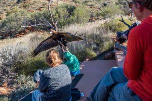 Shocking! Wedge-Tailed Eagle Devours Australian