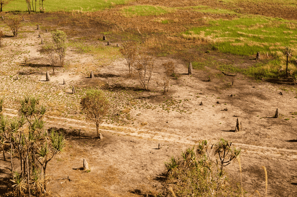 Termite mounds at the nadab floodplains