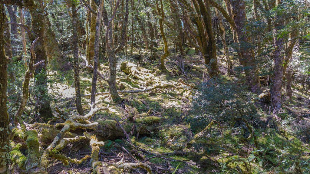 Cradle Mountain 7k Hike