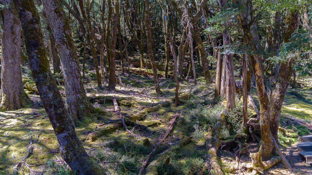 Cradle Mountain 7km Walk