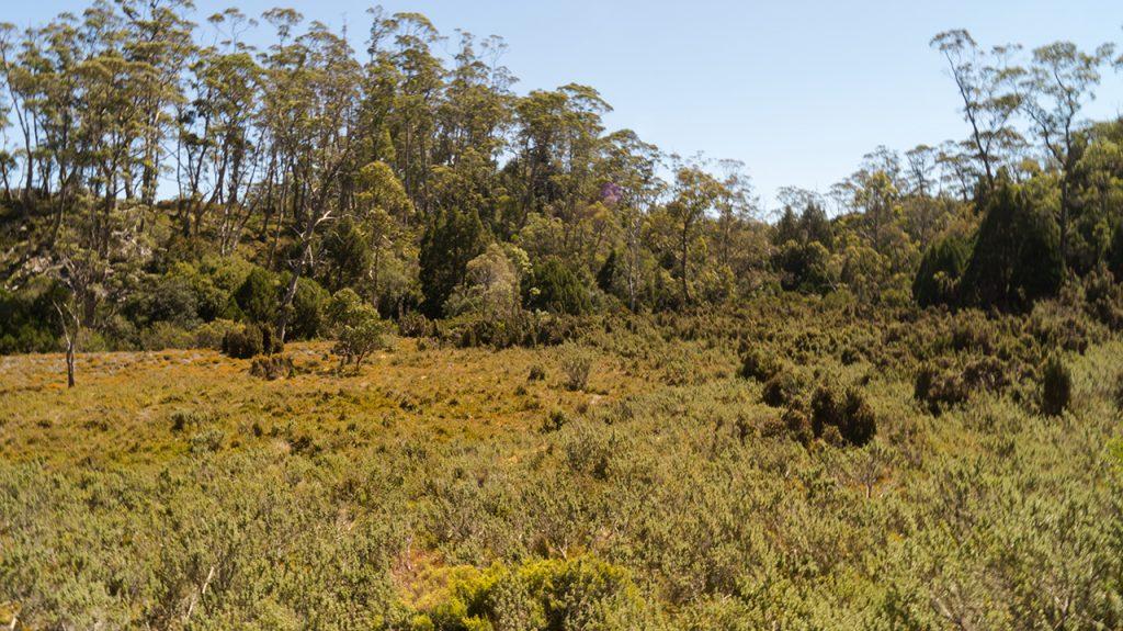 Cradle Mountain Meadow