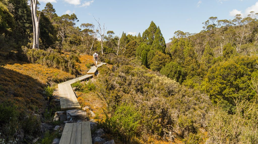 Wooden path Cradle Mountain