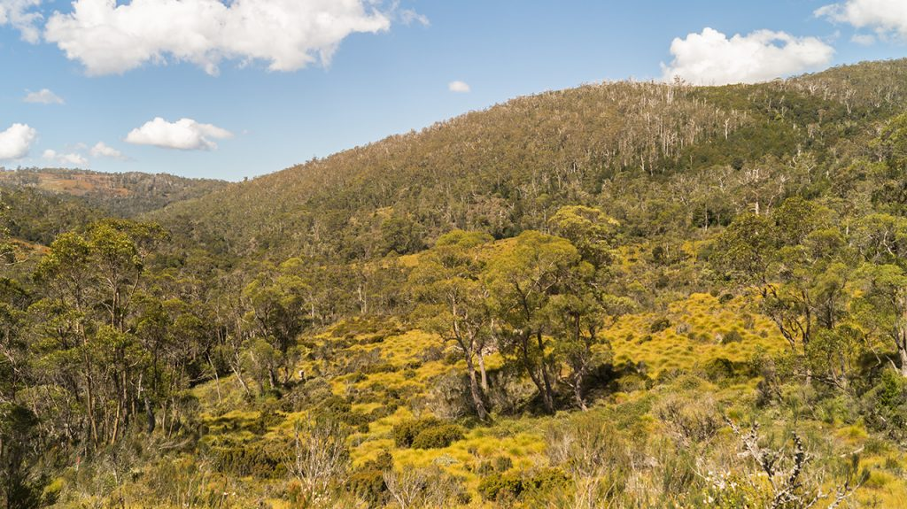 Open meadows Cradle Mountain