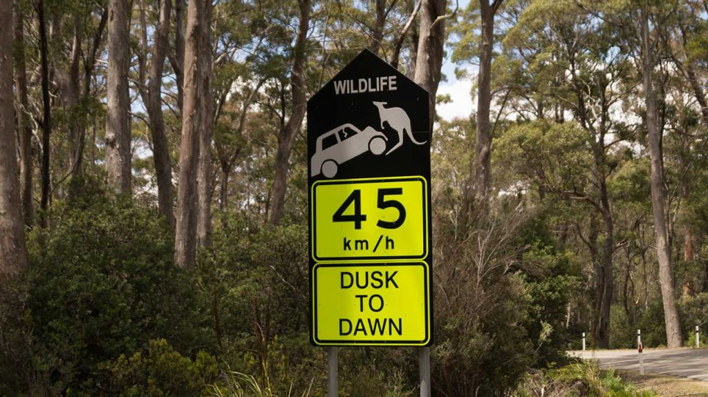 Weightlifting Kangaroo sign in Tasmania