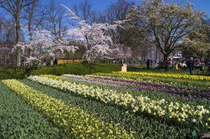 Holland's Tulip Season at Keukenhof Gardens