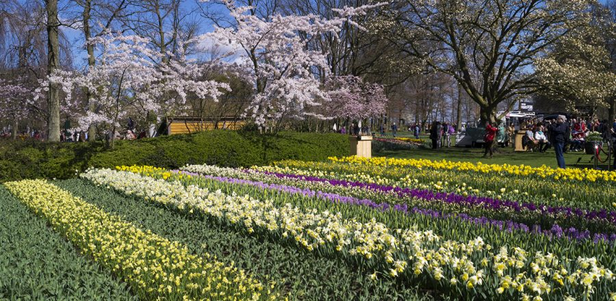 Holland's Tulip Season at Keukenhof Gardens