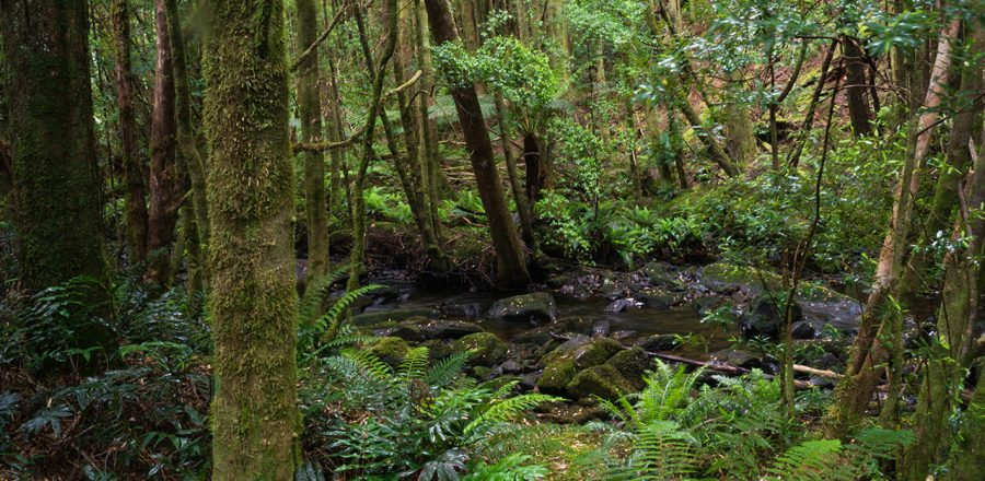 The Roadside Beauty of Tasmania