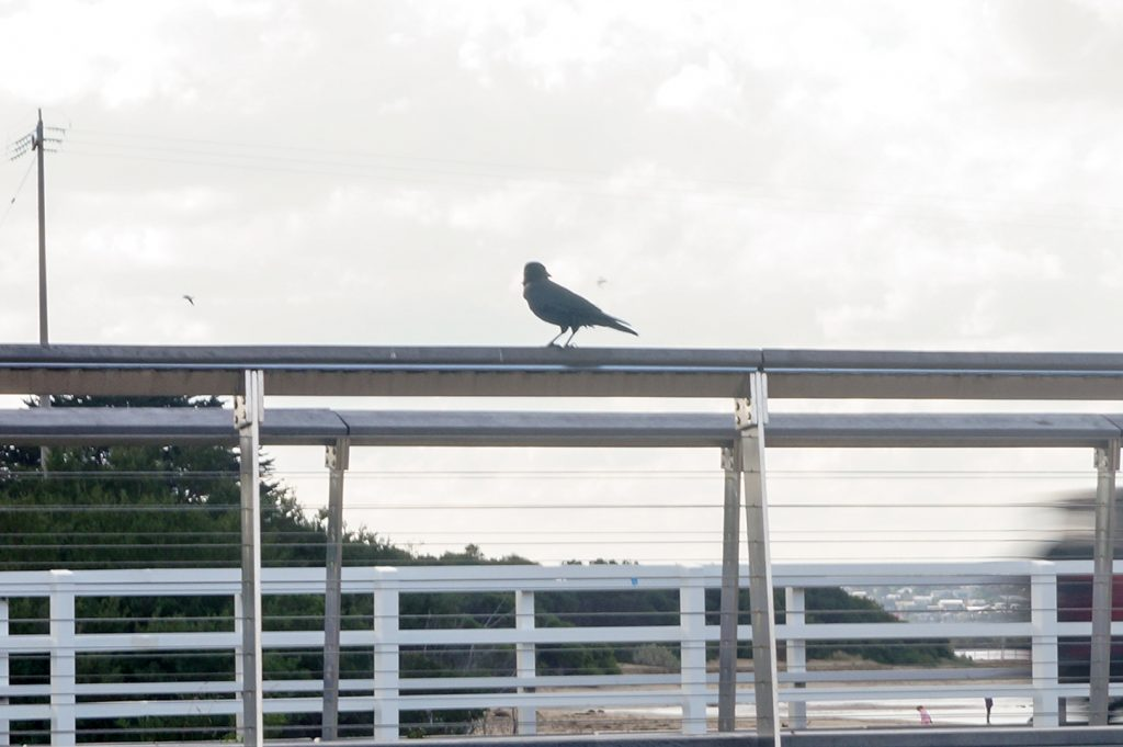 A small bird on a bridge railing