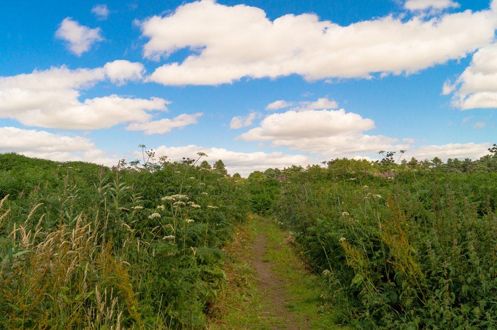Castle Ring walking trail