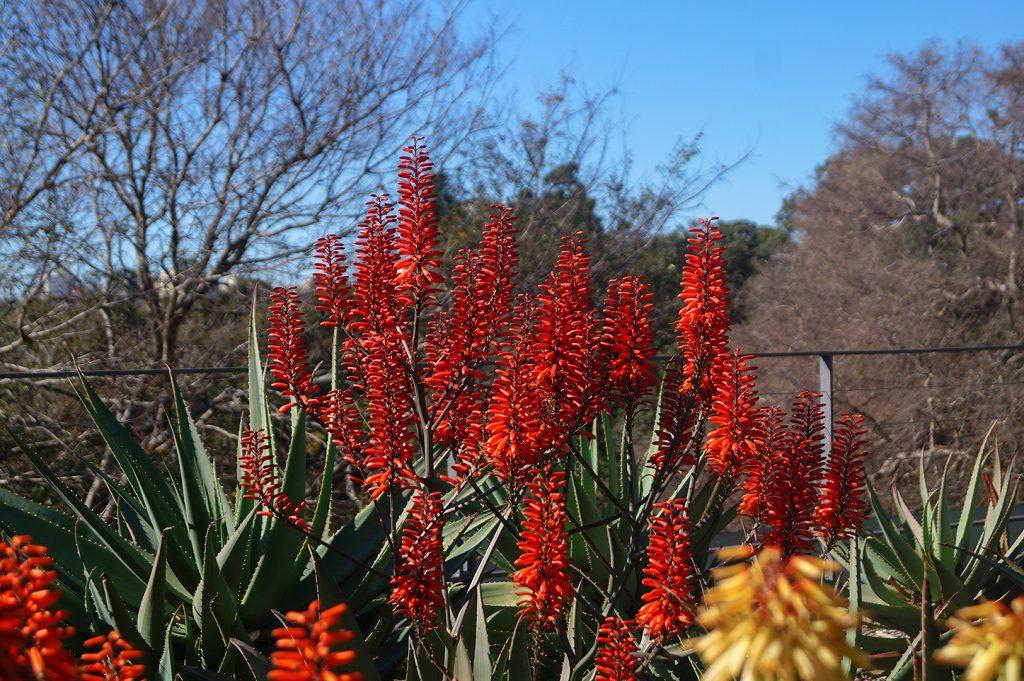 Flowers in Sydney Botanic Gardens