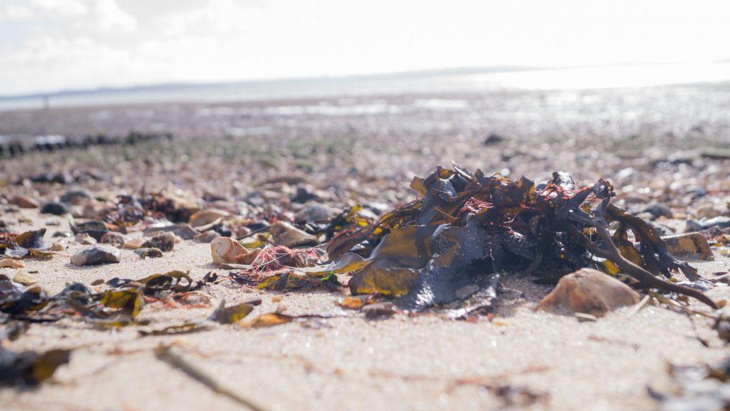 Seaweed on Lepe Beach