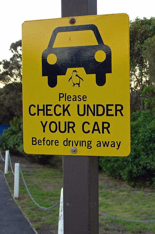 penguin under car road sign