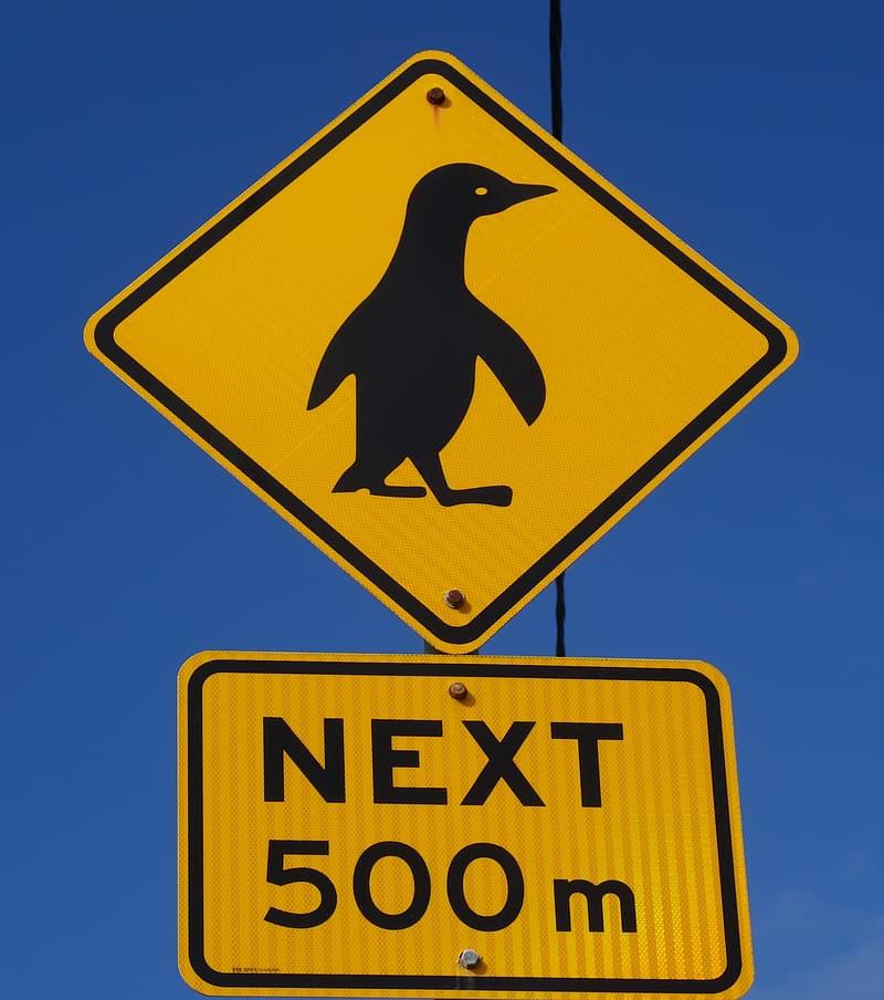 penguins next 500m road sign